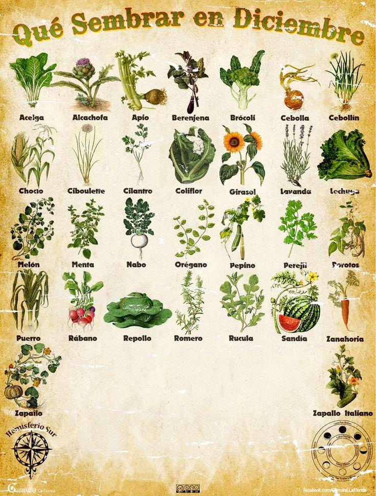 Les traemos este útil calendario de las Siembras del mes de Diciembre, además de fichas con información específica de cada planta que po...