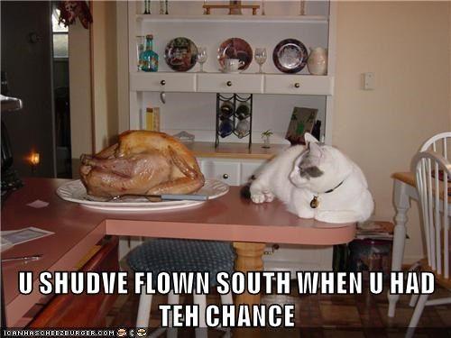 U SHUDVE FLOWN SOUTH WHEN U HAD TEH CHANCE