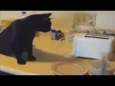 Video Lucu Kucing Lucu Banget http://www.youtube.com/watch?v=8m3tn_ZGV4c&feature=youtu.be