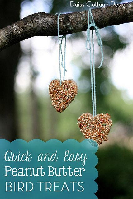 Cute treats to feed the birds:) Kids will love classifying the different kinds of birds. Great craft!