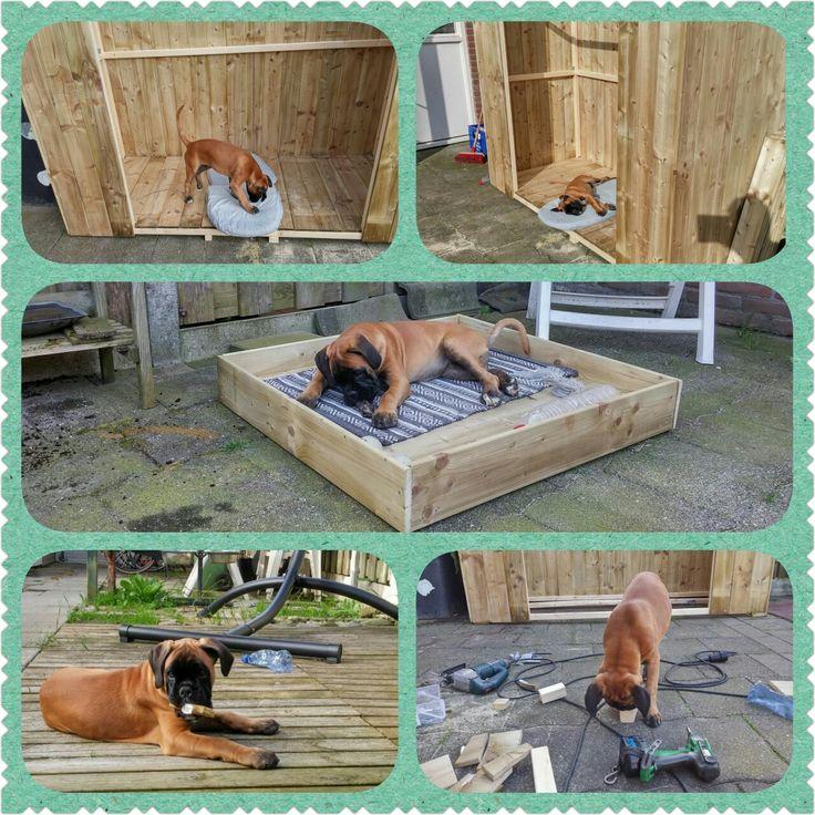 Toen mijn baas ging klussen in de tuin, onder mijn supervisie en hulp, dacht ik dat ik grootste hondenhok ever kreeg. Gelukkig niet want er zitten geen ramen in!! Wel heb ik een vet cool lounge bed gekregen  voor buiten. Ben ik een bofferd he.