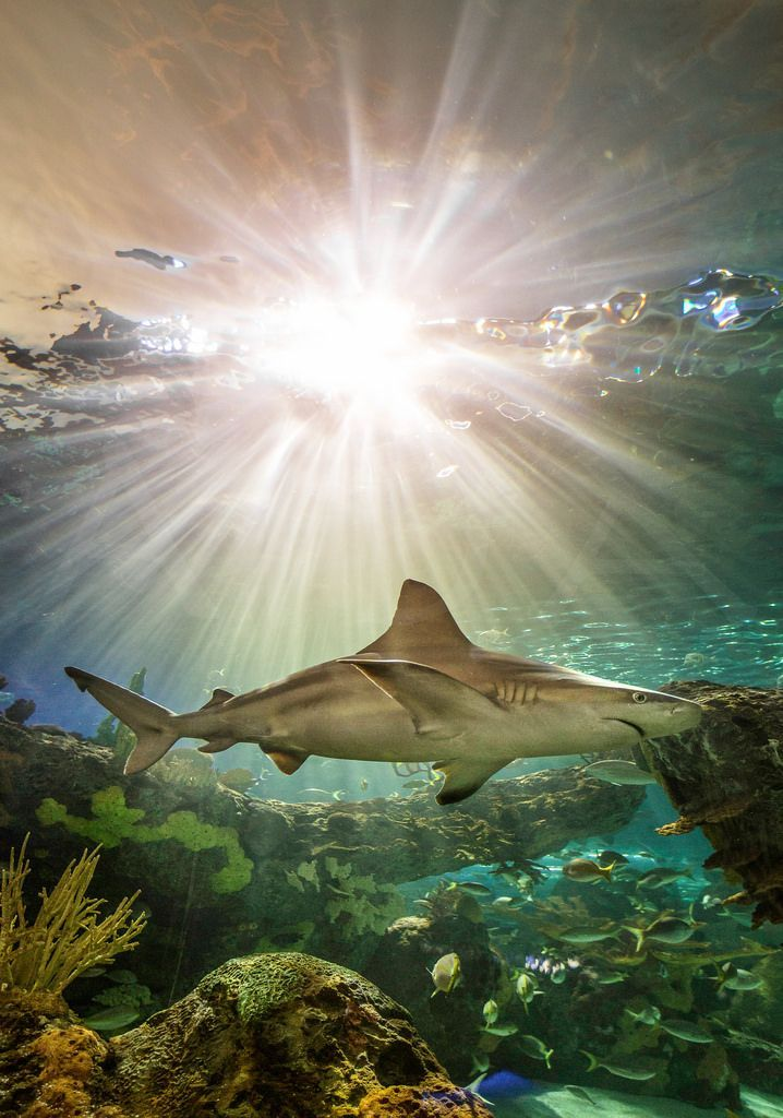 Shark over reef. #underwater #shark