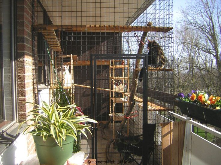 Apartment 33 Cat Enclosure Outdoor Cat Enclosure