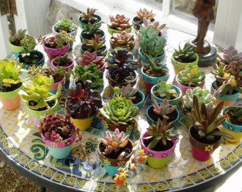 Earth Day planters