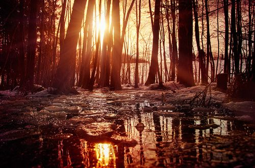 sunLights, Life Quotes, Melted Forests, Real Life, Nature, Sunris Sunsets, Broken Heart, Photography Inspiration, Happy Life