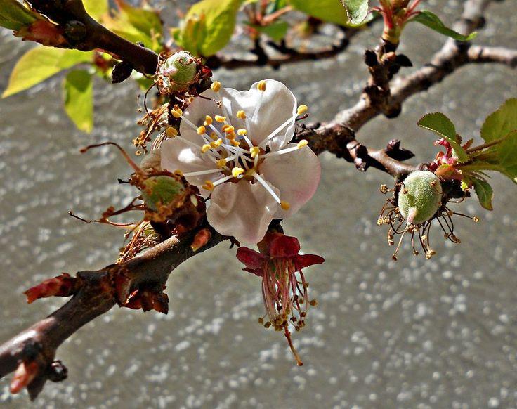 Last blossom by marilenavaccarini