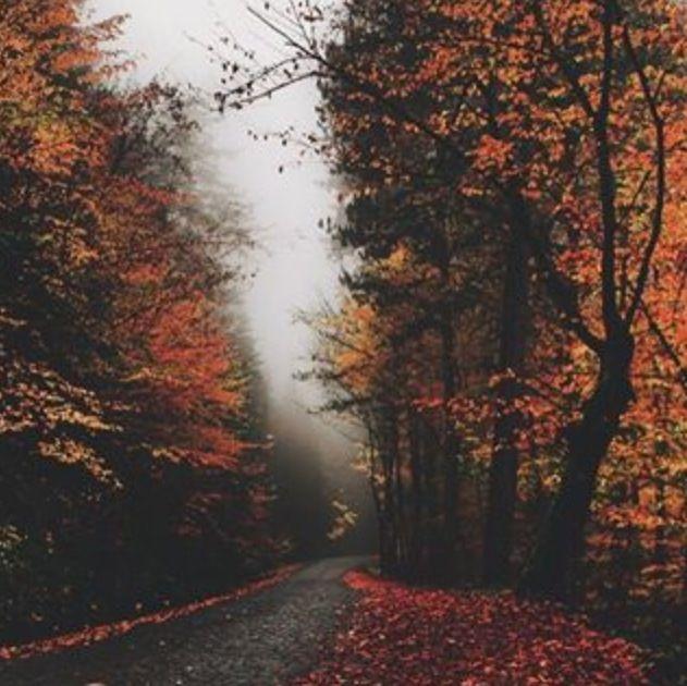 Autumng Asthetics