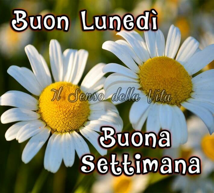 14 best images about buon luned on pinterest mondays behance and good morning for Buon lunedi whatsapp