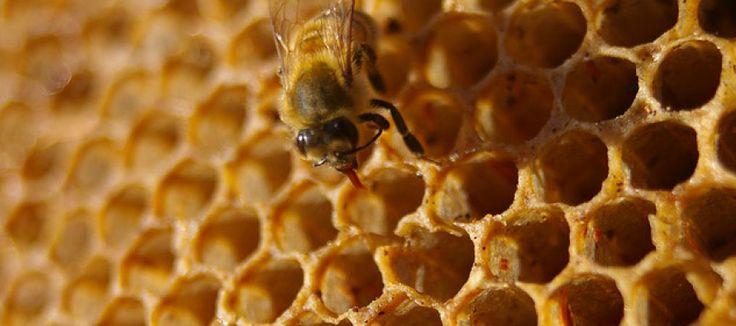 Propiedades medicinales de la miel. Revisión de revisiones