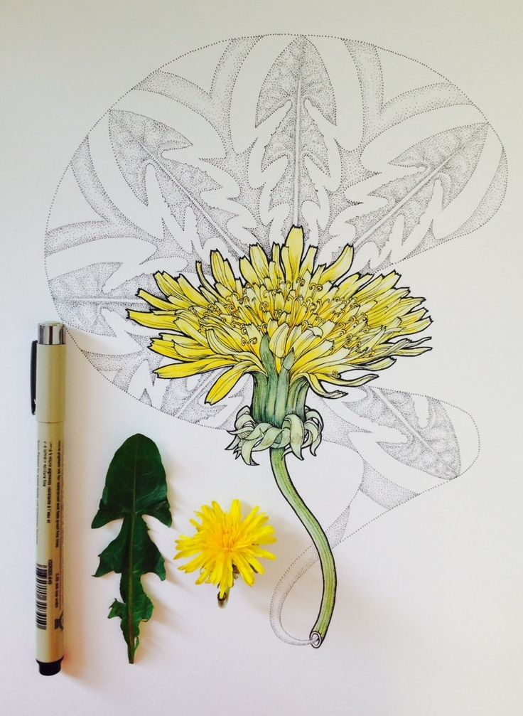 """noel badges pugh on scientific illustration; """"go outside and draw from life. bring a magnifying glass."""""""