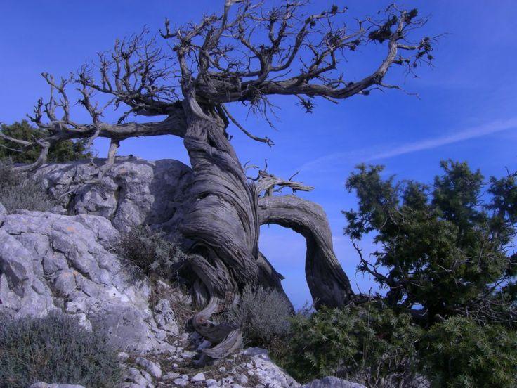 """Stefano Pes, """"Ginepro"""", Creste Silana - Urzulei OG  #Sardegna  #escursionismo #escursione #escursioni #outdoor #natura Escursionismo.it"""