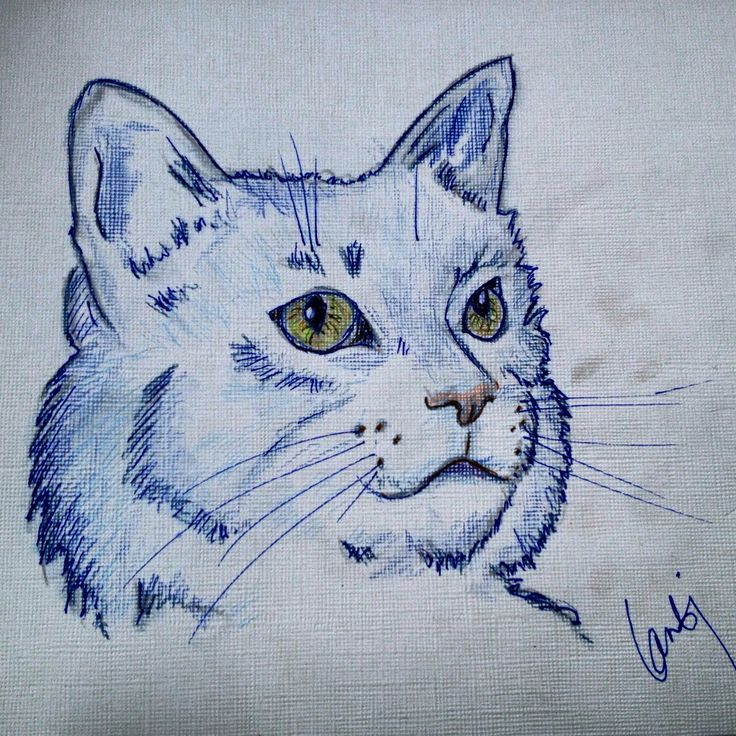 Marker pens and watercolour pencils on paper. Drawing of an imaginary cat