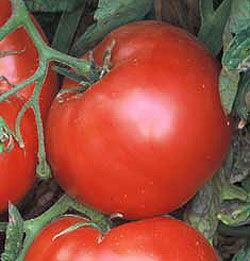 DIY: Growing Tomatoes - lots of tips on feeding, watering, pruning, etc. so you will have a plentiful supply of tomatoes this season.