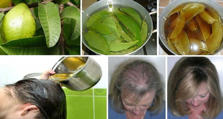 Guava Leaves Can 100% Stop Hair Loss And Make It Grow Like Crazy