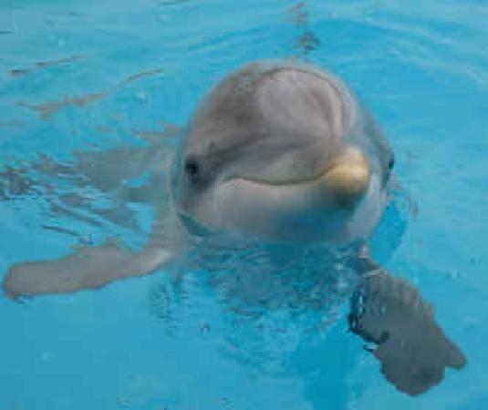 Tripadvisor Dolphin Swim Panama City Beach