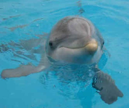 Pet Dolphins Panama City Beach