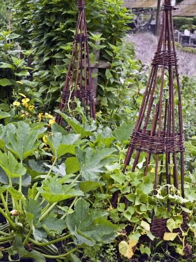 Zucchini Plant Companions: Plants That Are Compatible With Zucchini - Are you wondering about companion planting or what grows well with zucchini? Gardeners can take advantage of several plants that are compatible with zucchini. This article will help get you started.