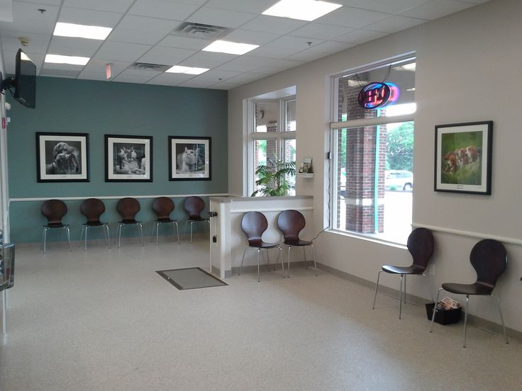 60 Best Reception Areas Veterinary Hospital Design Images