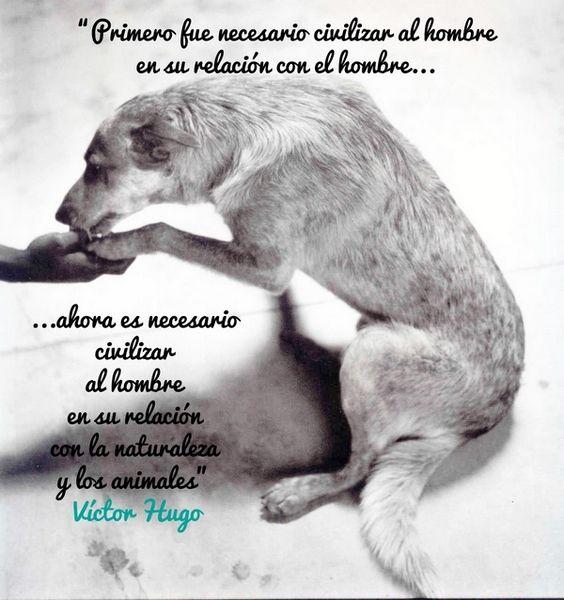 Primero fue necesario civilizar al hombre en su relación con el hombre… ahora es necesario civilizar al hombre en su relación con la naturaleza y los animales. Víctor Hugo.