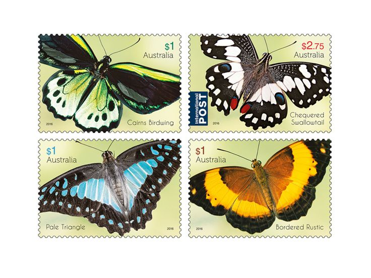 COLLECTORZPEDIA Beautiful Butterflies