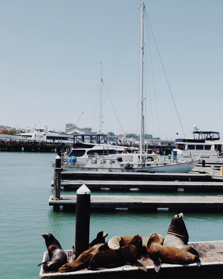 #DiscoveryWithHoboh 📌 #hobohinusa #hobohinsanfrancisco . From amazing views and a sea of sea lions…""
