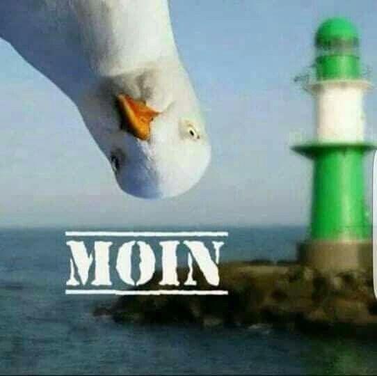 Moin – Meer