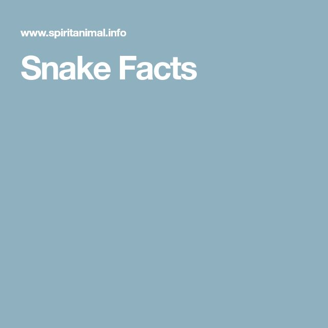 Snake Facts