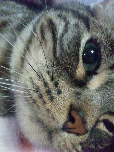 #neko #cat (via chiko_ksmt)