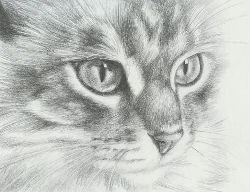 how to draw realistic cats | 25 Hand Drawing Cat Images for Your Insparation. « LibDesigner