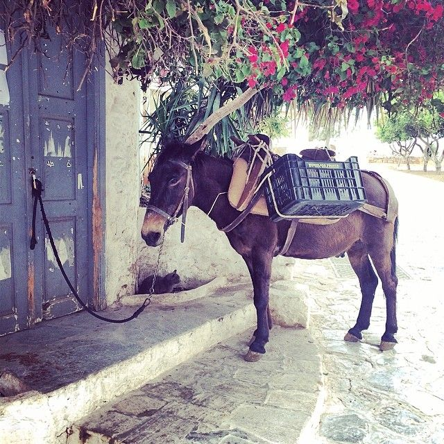 Friendly donkey in #Hydra!  Photo credits @katykokol