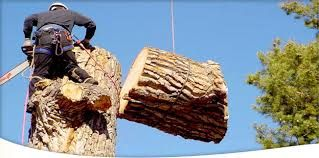 If you are looking for Best Tree surgeons and Tree care  then you are at the best place that is at Arbor-Call Ltd.