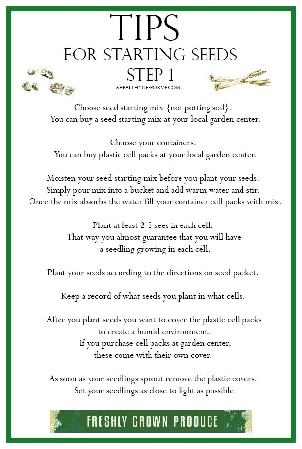 Tips for Starting Seeds Step 1 help to make the procedure simple and enjoyable| ahealthylifeforme.com