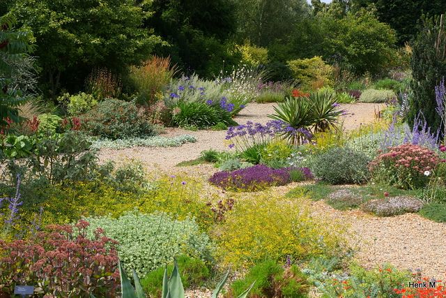 Beth Chatto Dry Garden Beth Chatto Gardens Plants