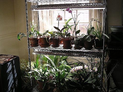 14 Best Orchid Growing Images On Pinterest Indoor 400 x 300