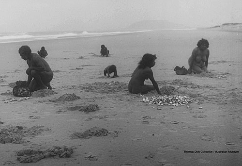 Aboriginal Technology - Women collecting pippies and men cooking them in a sand oven - Source:Thomas Dick Collection, Australian Museum.