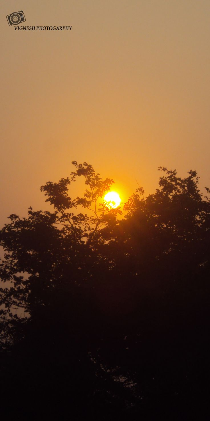 very nicely nature at evening time am take click capture.