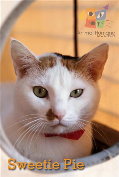 Sweetie Pie is a two-and-a-half year old female available for adoption at our main location today!