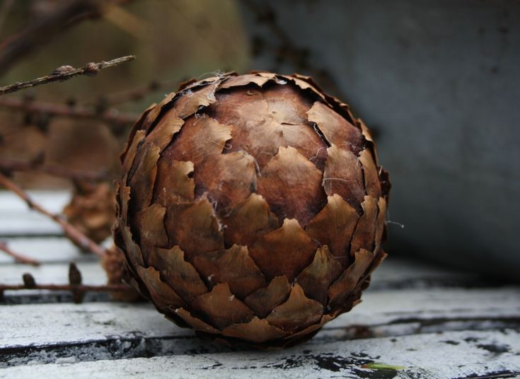 Ornament made of pine cone 'leaves' and a styrofoam ball