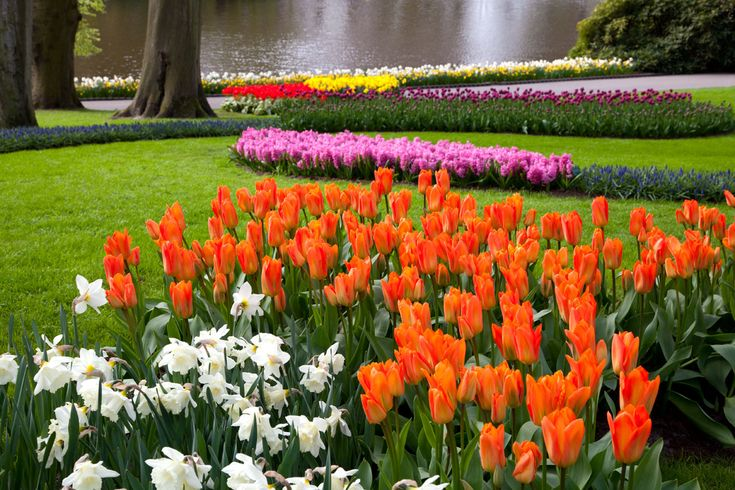Keukenhof Park - Amsterdam
