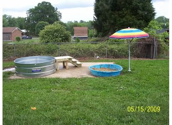 the backyard dog playground is finished pics backyard for the dogs