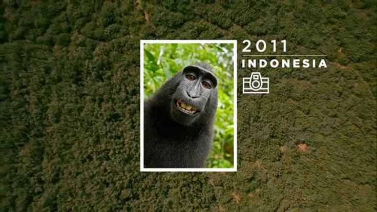 Animal Copyrights - WWF by Cheil Spain