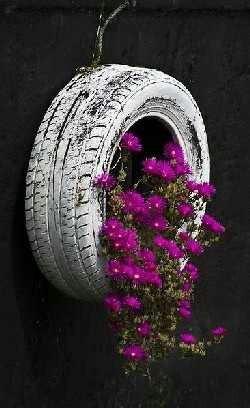 Plant in een autoband
