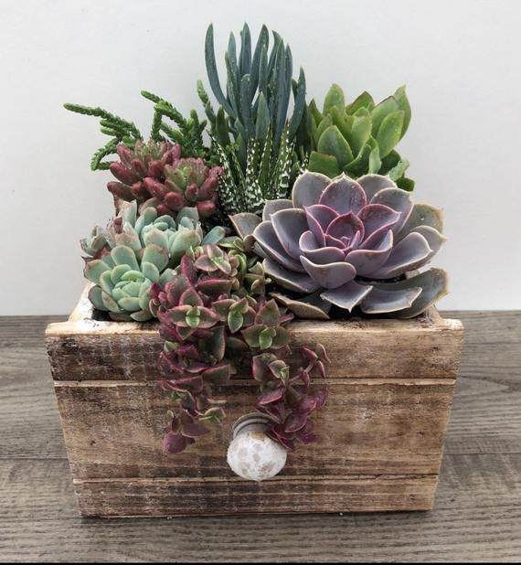Succulent Arrangement Small Rustic Drawer Planter Etsy With