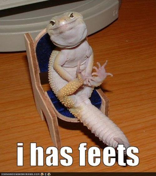 LOLAnimal Pictures, Funny Pictures, Funnyanimal, Hilarious Animal, Feet, Funny Animal, So Funny, Lizards, Leopards Geckos