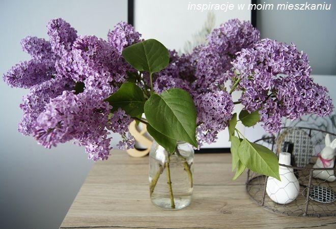 inspiracje w moim mieszkaniu: Bez lilak w aranżacji inspirowanej Alicją w Kraini...