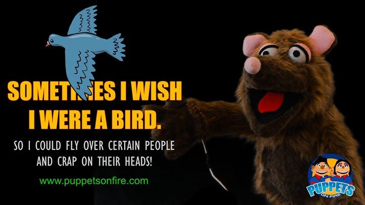 Sometimes I wish I were a bird... #funnymemes #meme #joke #oneliner #puppet #funnypuppets http://ift.tt/2mGYExL
