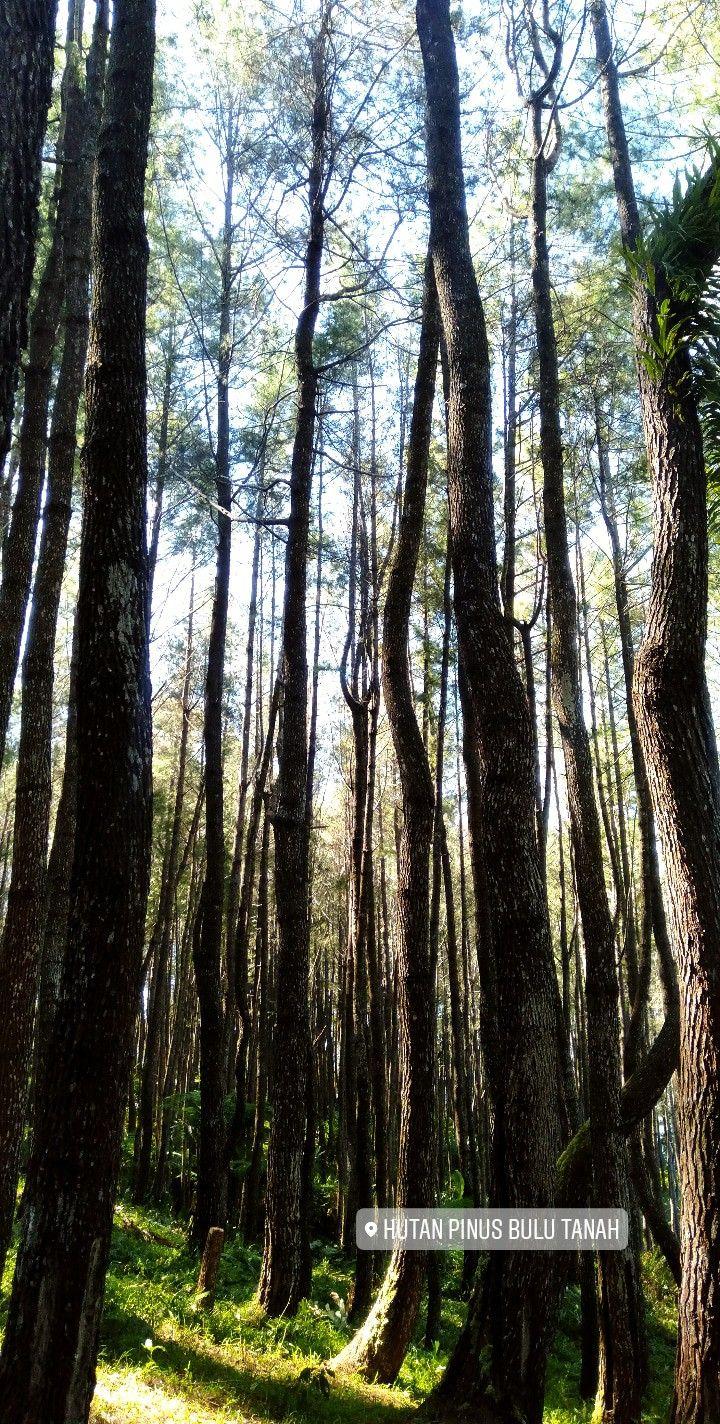 Handwood és prostatitis