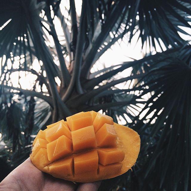 Jungle Snack  #oliveNcooper