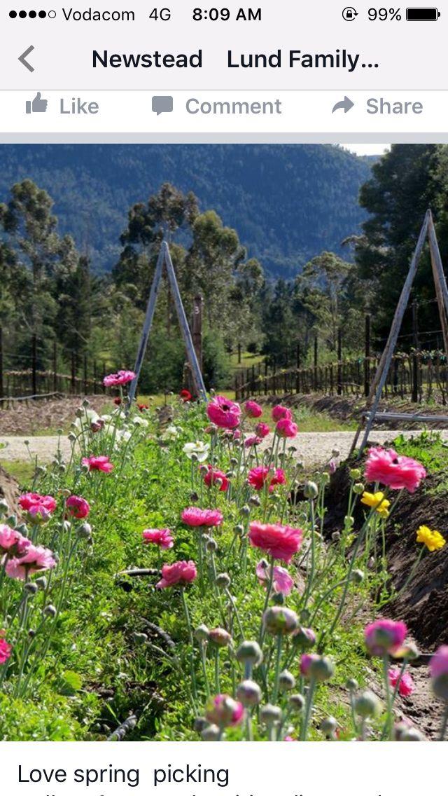 Newstead Wines Flower & Bulb gardens