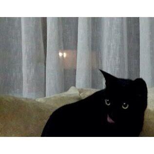 Salem love you